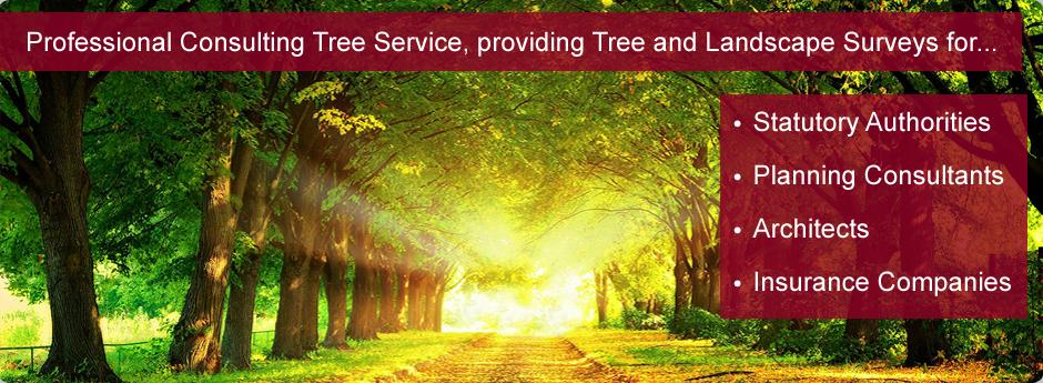 Professional Tree Consulting Service